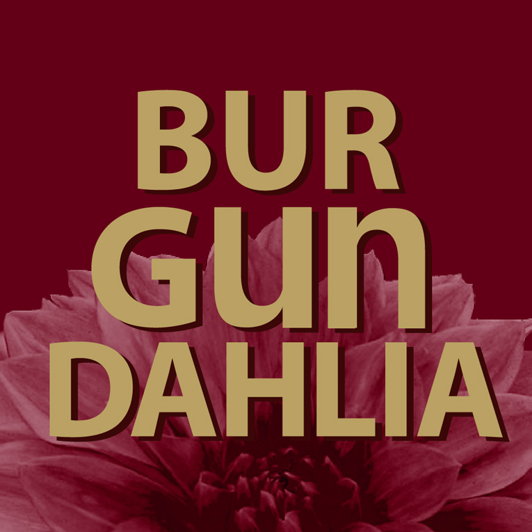 Cover art for Burgundahlia  by Ethan Anarchy / Ethan Lesley,